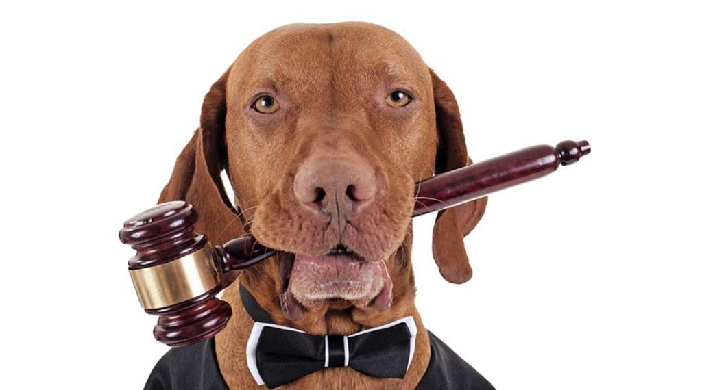 dog laws