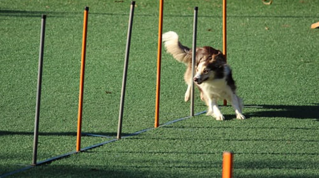 amazing dogs feats