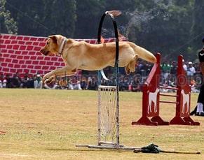 indian army dog's training
