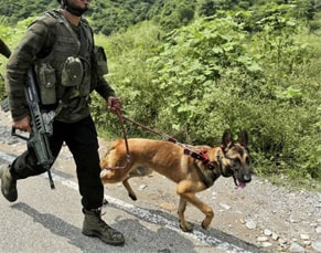 army dogs job roles