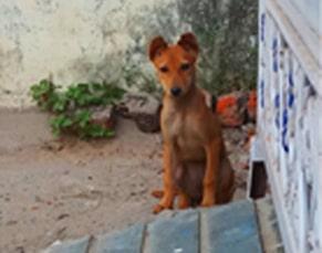 A story of a stray dog