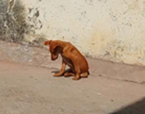 Street dog's autobiography