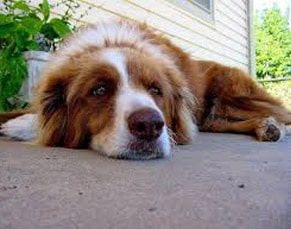 heartworms in dogs symptoms