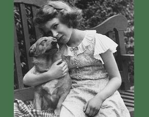 the royal corgi dog