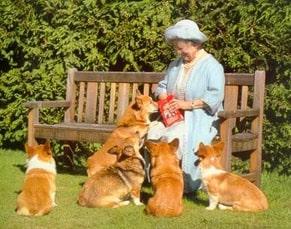 queen Elizabeth's corgis