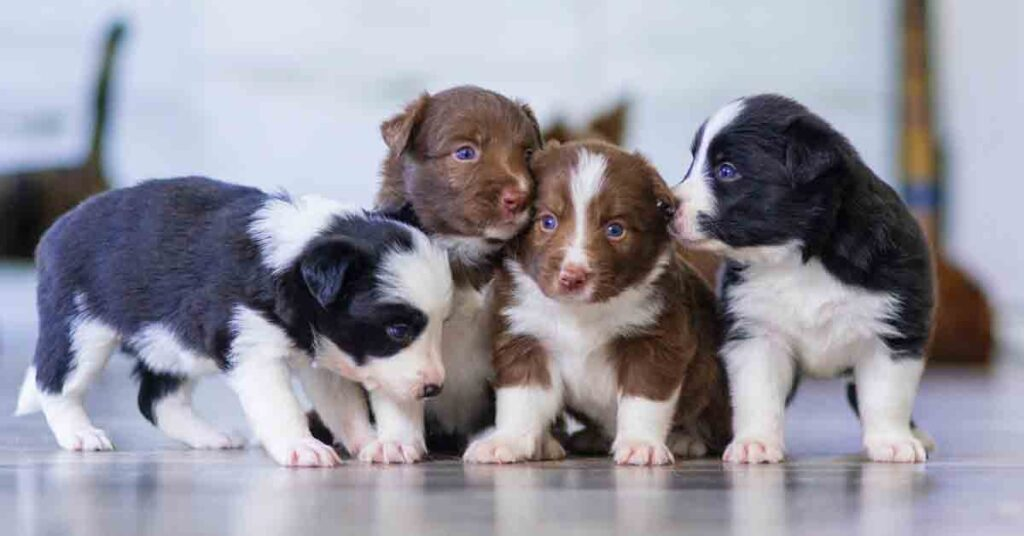 facts about puppies